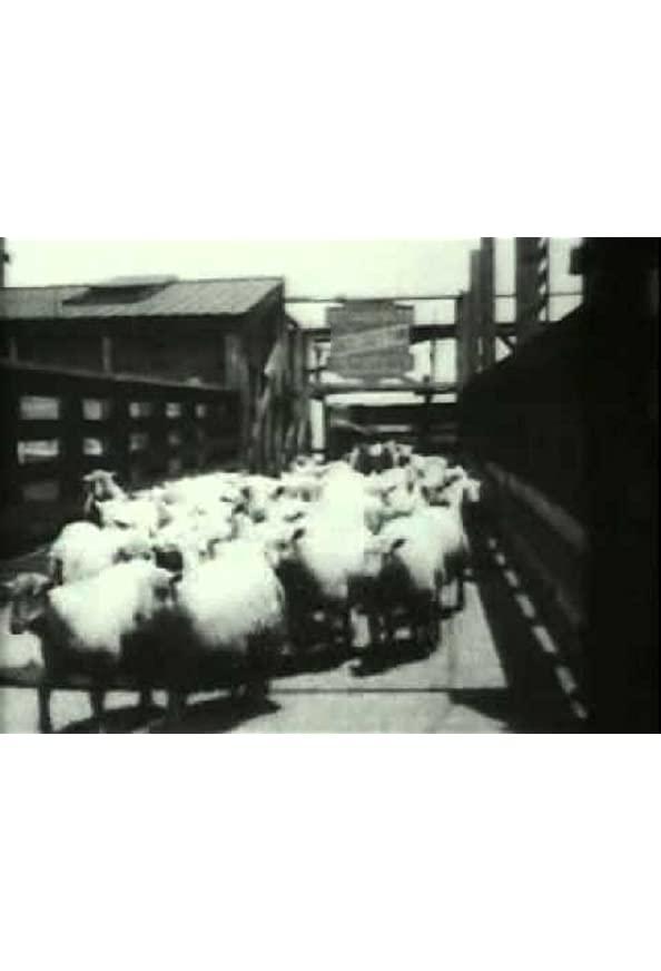 Sheep Run, Chicago Stockyards kapak
