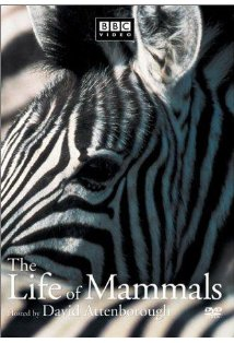 The Life of Mammals kapak