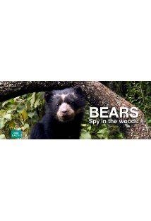 Bears: Spy in the Woods kapak