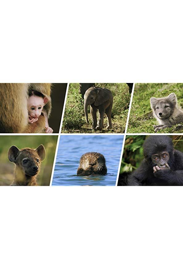 Animal Babies: First Year on Earth kapak