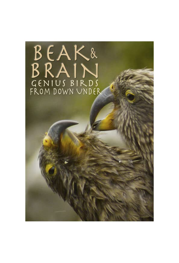 Beak & Brain - Genius Birds from Down Under kapak