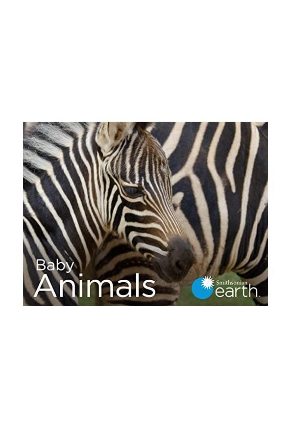 Baby Animals kapak