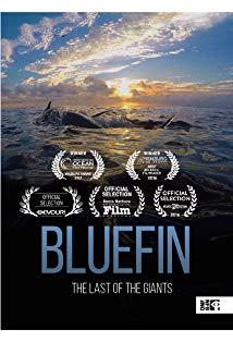 Bluefin kapak