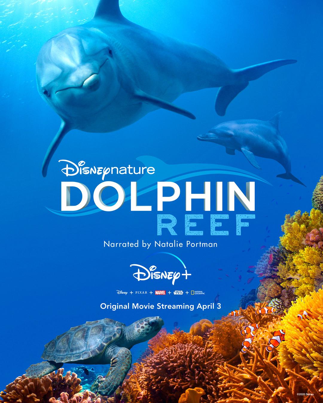 Dolphin Reef kapak