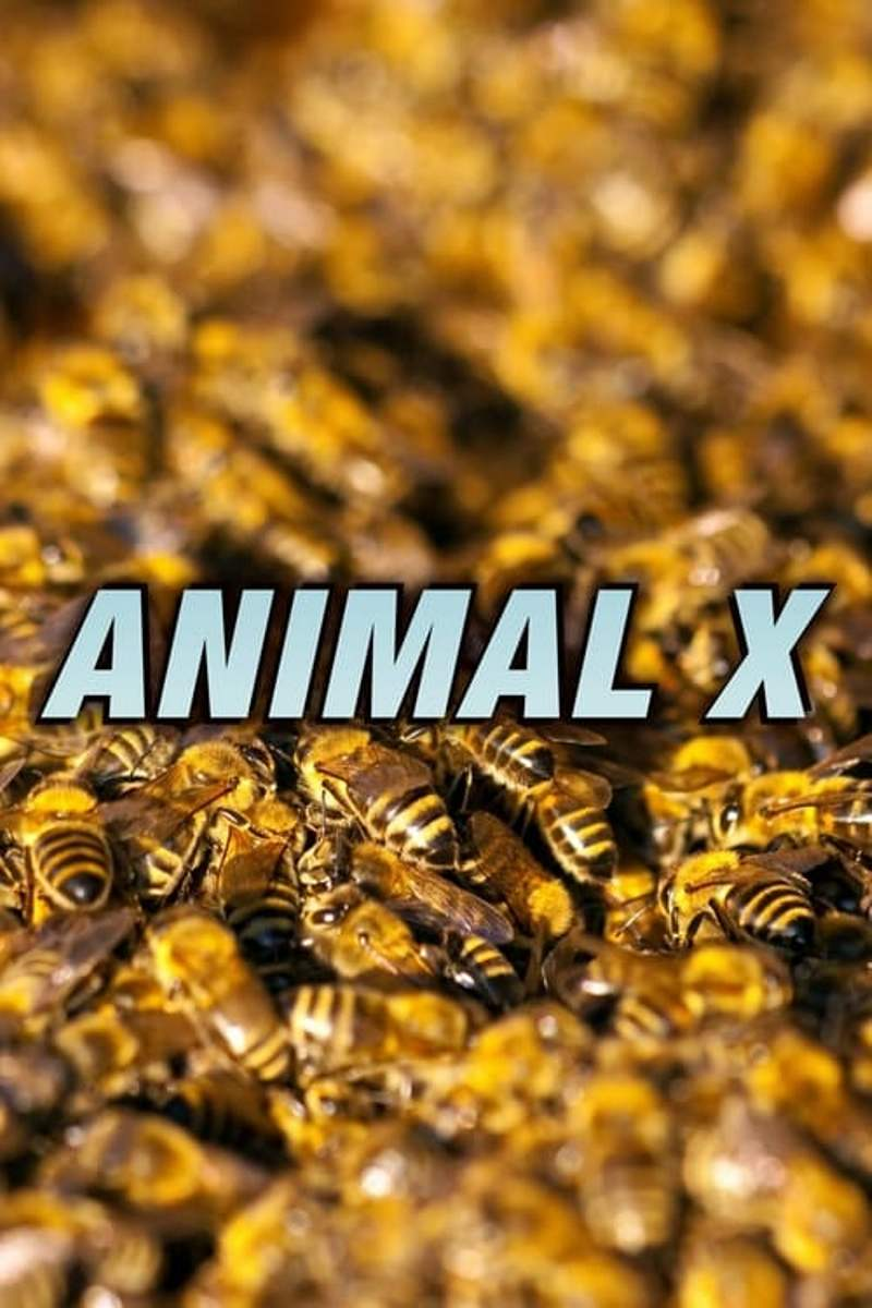 Animal X kapak