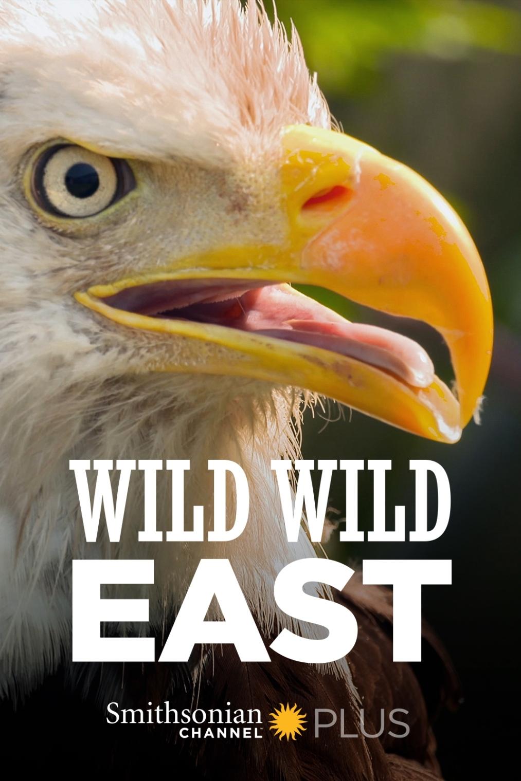 Wild Wild East kapak