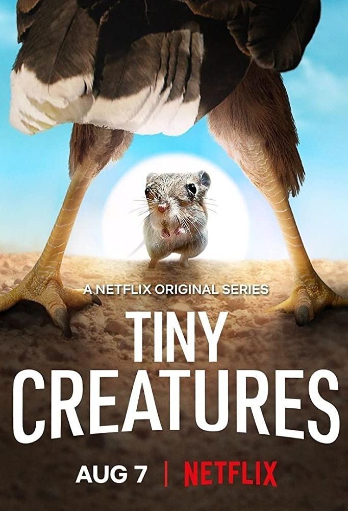 Tiny Creatures kapak