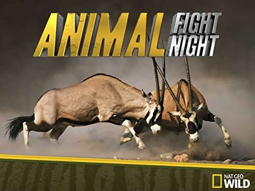 Animal Fight Night kapak