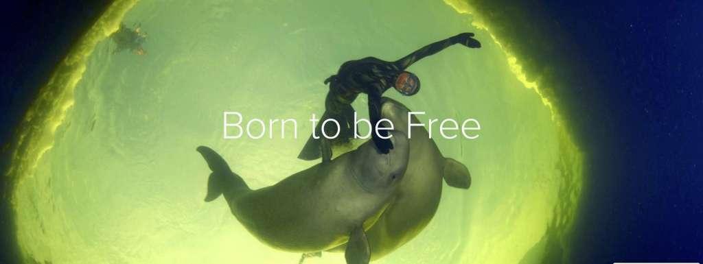 Born to Be Free kapak