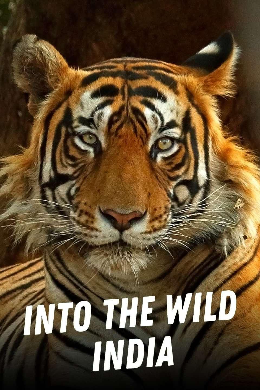 Into the Wild: India kapak