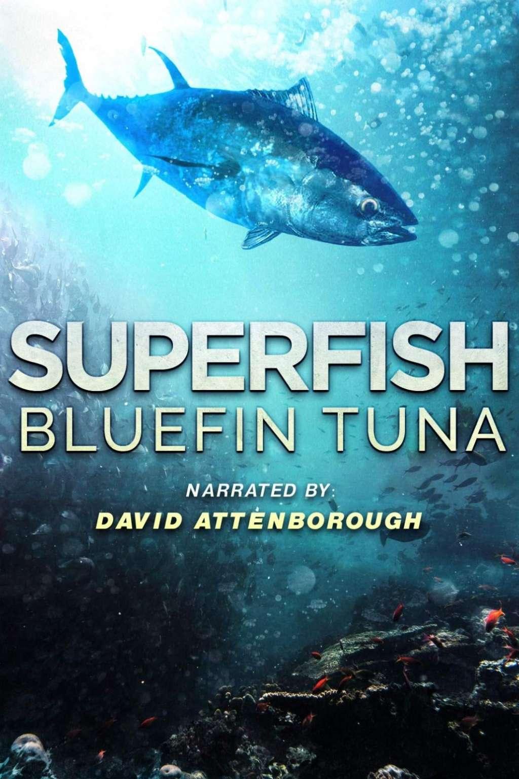Superfish Bluefin Tuna kapak