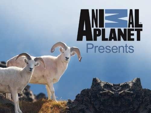Animal Planet Presents kapak