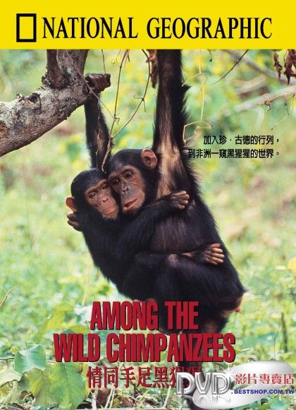 Among the Wild Chimpanzees kapak