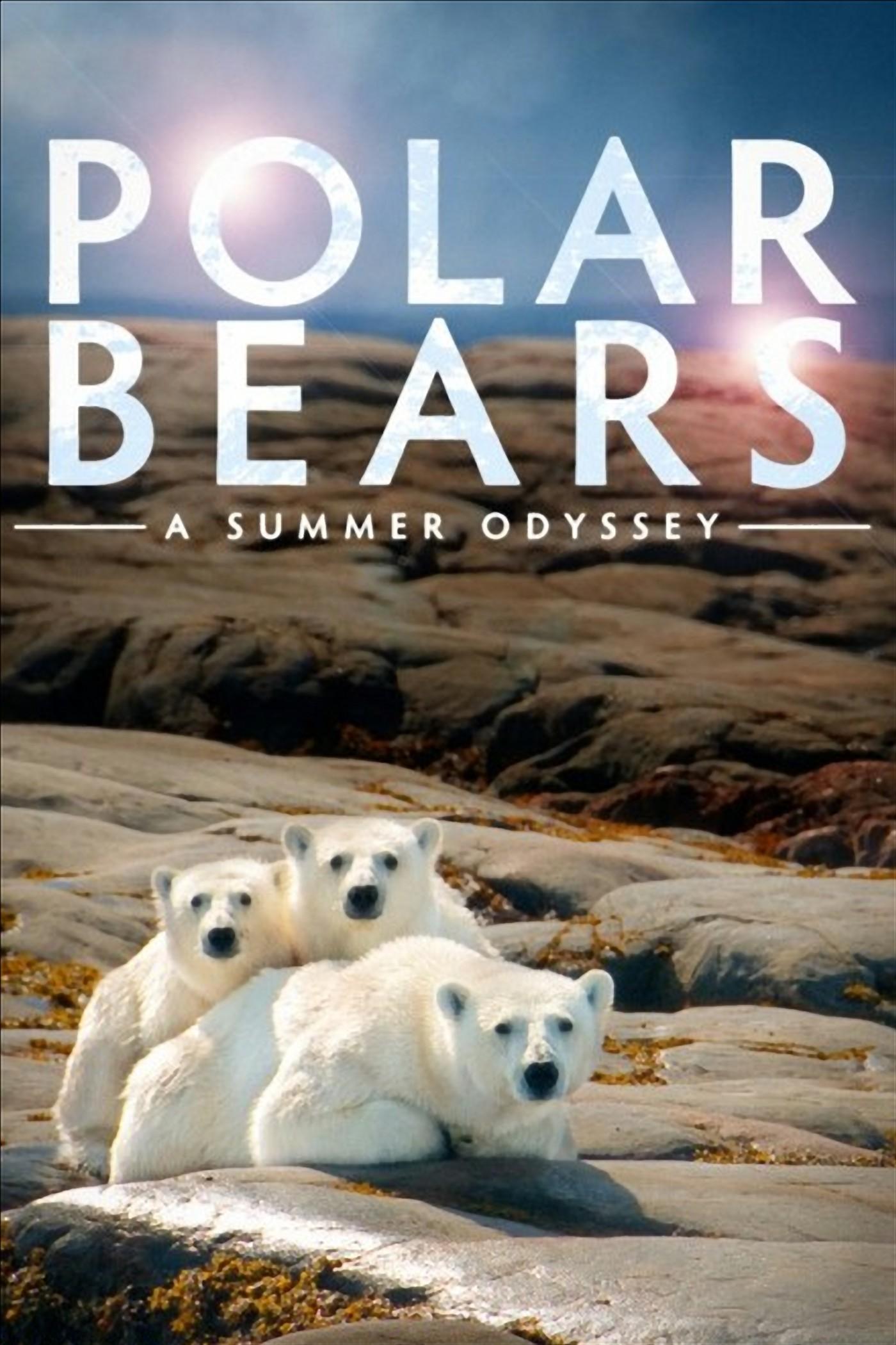 Polar Bears: A Summer Odyssey kapak