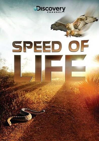 Speed of Life kapak