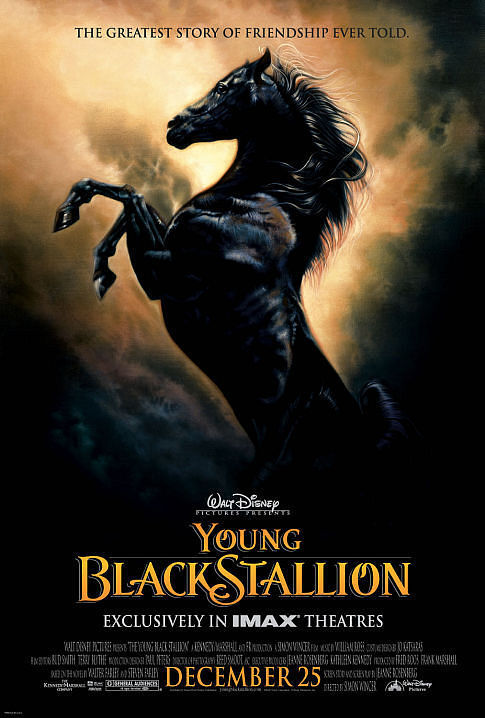 The Young Black Stallion kapak