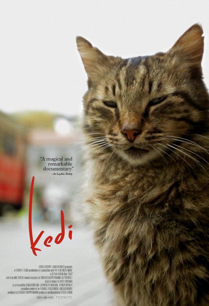Kedi kapak