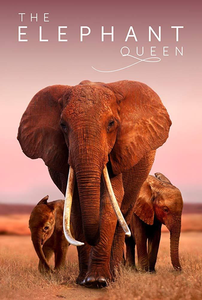 The Elephant Queen kapak